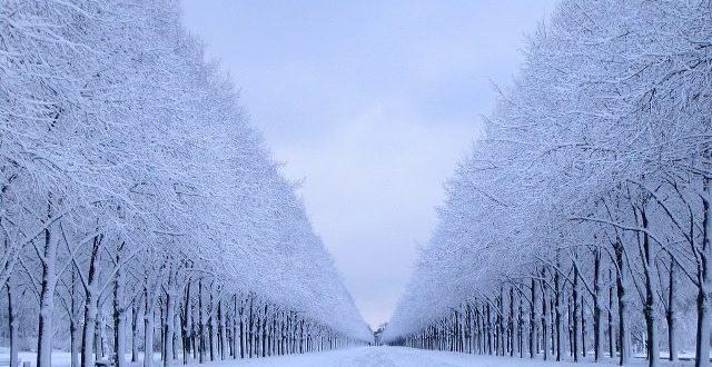 Kış Diyeti